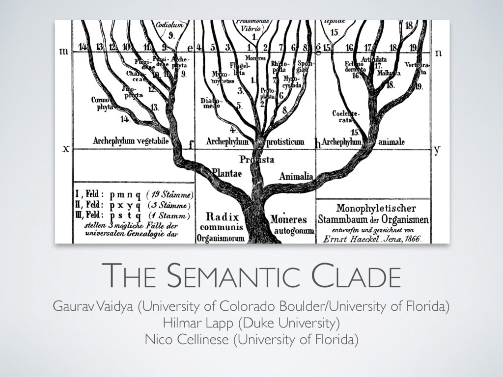 THE SEMANTIC CLADE Gaurav Vaidya (University of...
