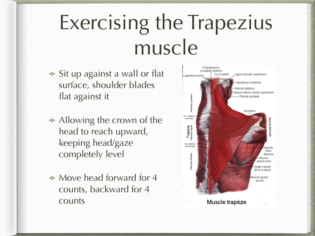 Exercising the Trapezius muscle Sit up against ...