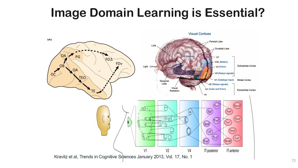 Image Domain Learning is Essential? 73 Kravitz ...
