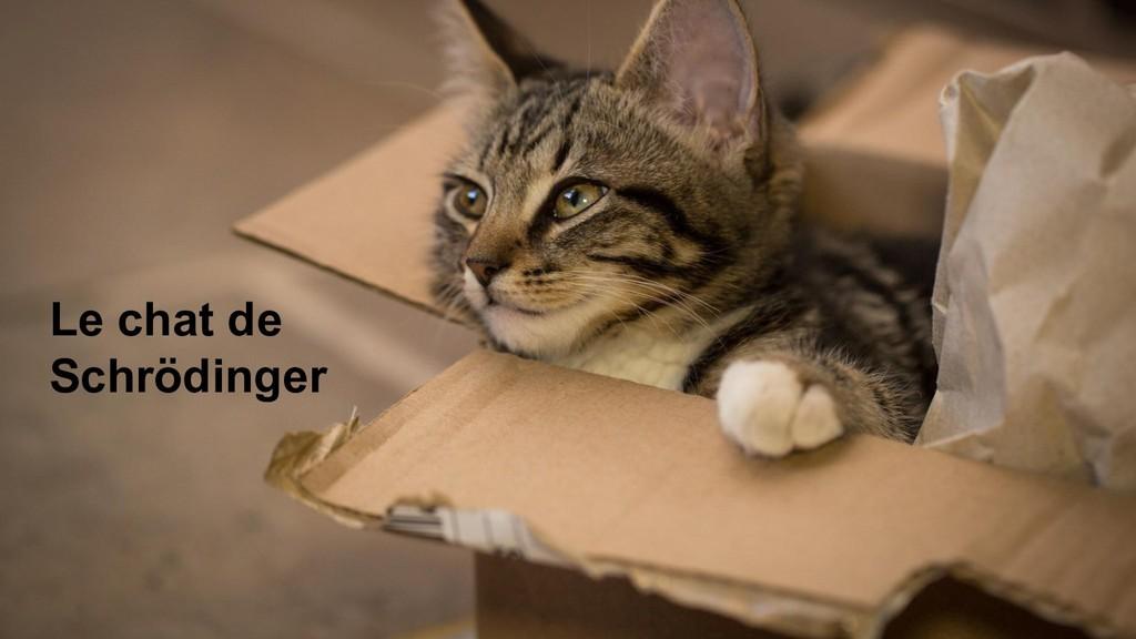 38 Le chat de Schrödinger