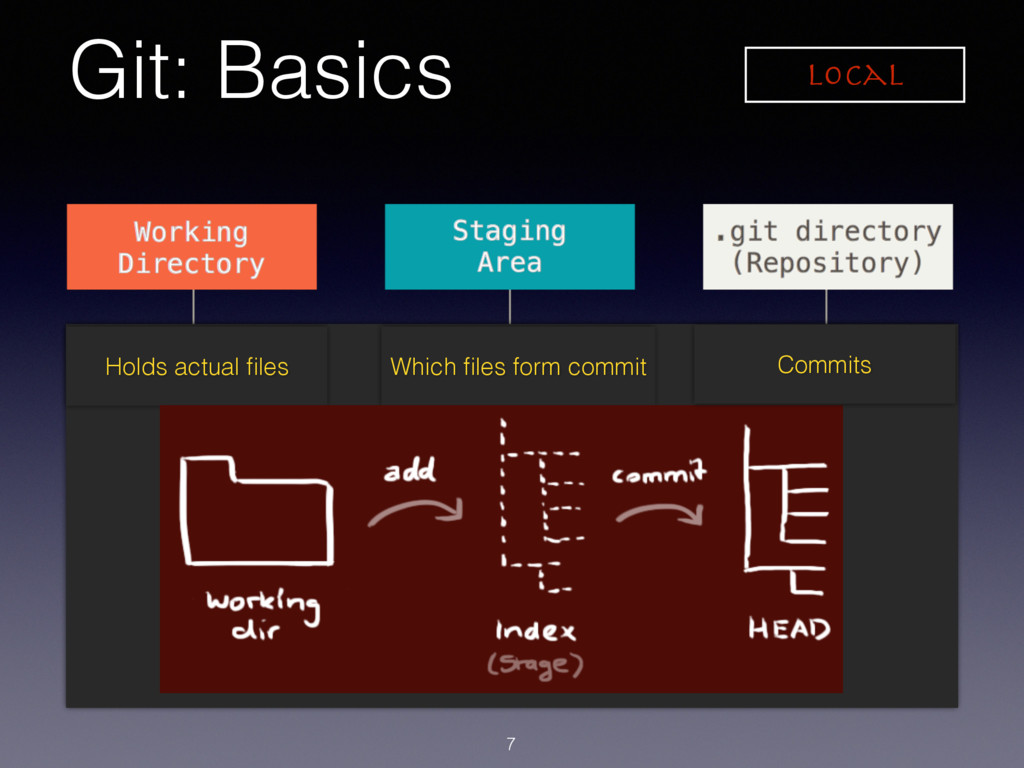 Git: Basics 7 Holds actual files Which files form...