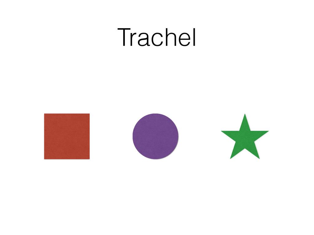 Trachel