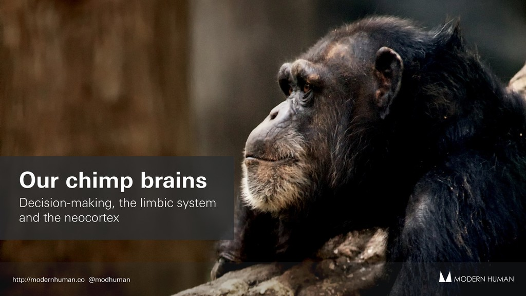 Our chimp brains Decision-making, the limbic sy...