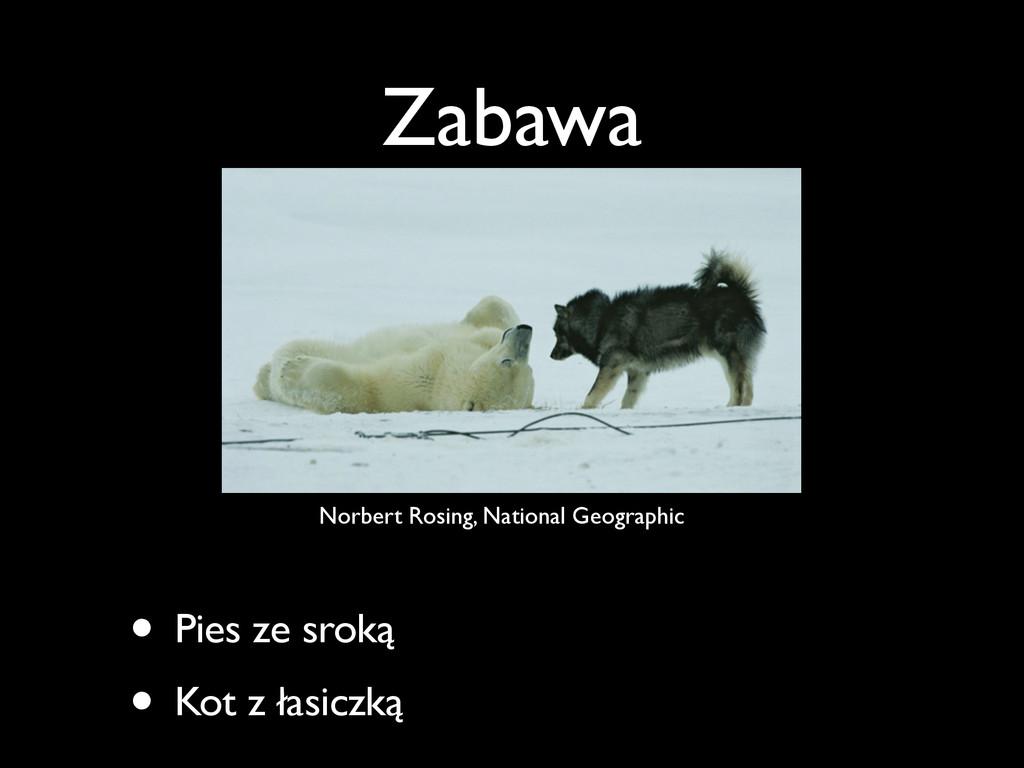 Zabawa • Pies ze sroką • Kot z łasiczką Norbert...