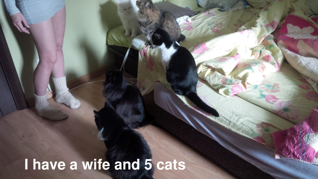 I have a wife and 5 cats