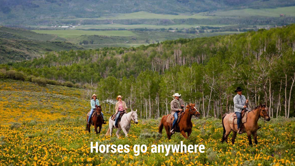 Horses go anywhere