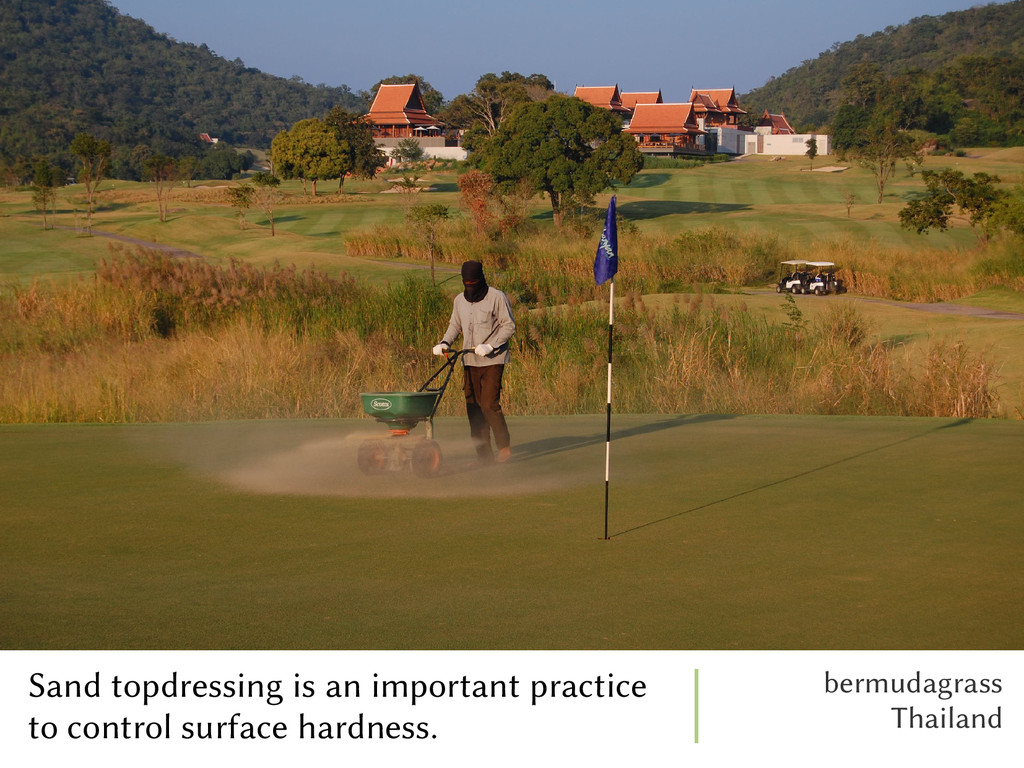 Sand topdressing is an important practice to co...