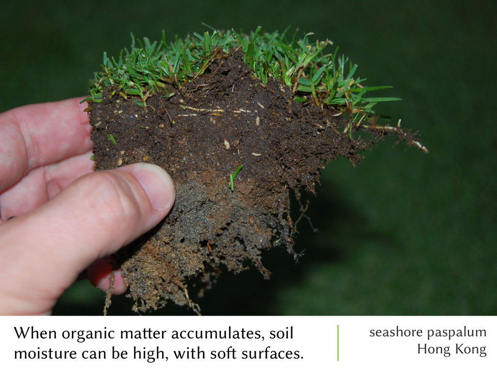 When organic matter accumulates, soil moisture ...