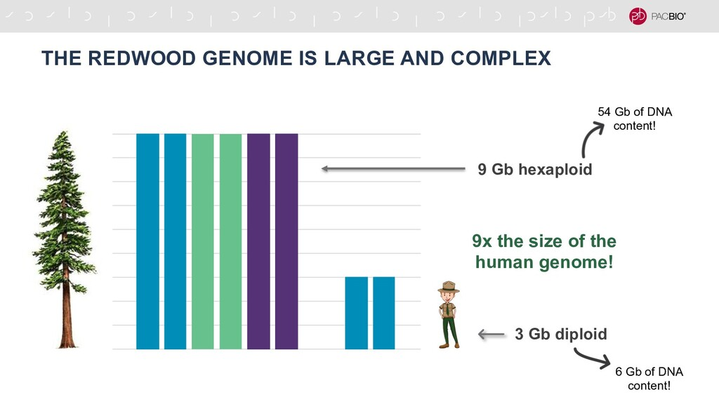 THE REDWOOD GENOME IS LARGE AND COMPLEX 3 Gb di...
