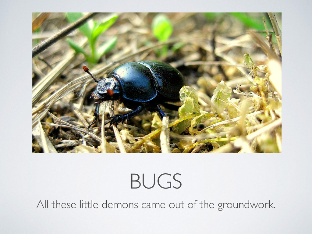 BUGS All these little demons came out of the gr...