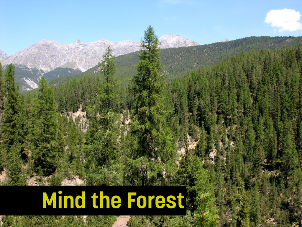 Mind the Forest