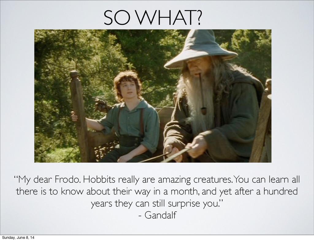 """SO WHAT? """"My dear Frodo. Hobbits really are ama..."""
