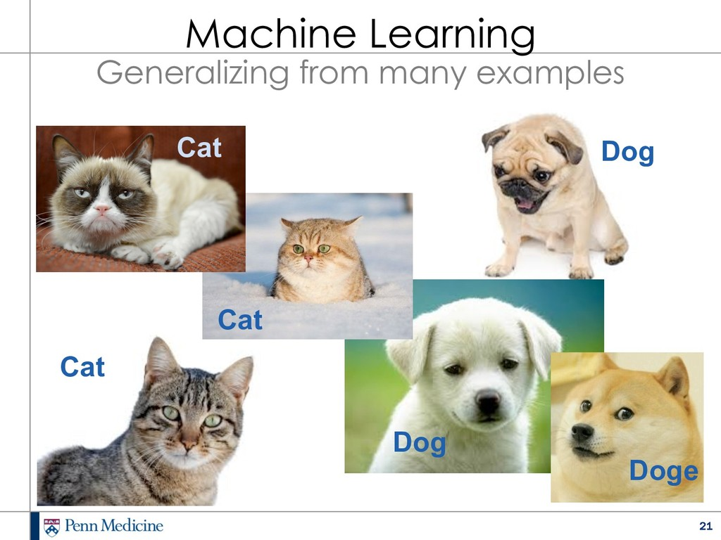 21 Cat Cat Cat Dog Dog Doge Machine Learning Ge...