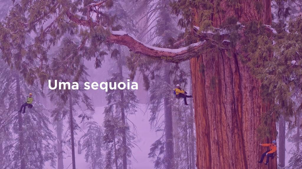 Uma sequoia
