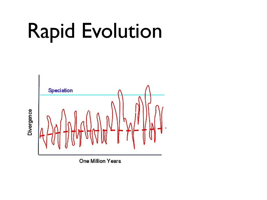Rapid Evolution