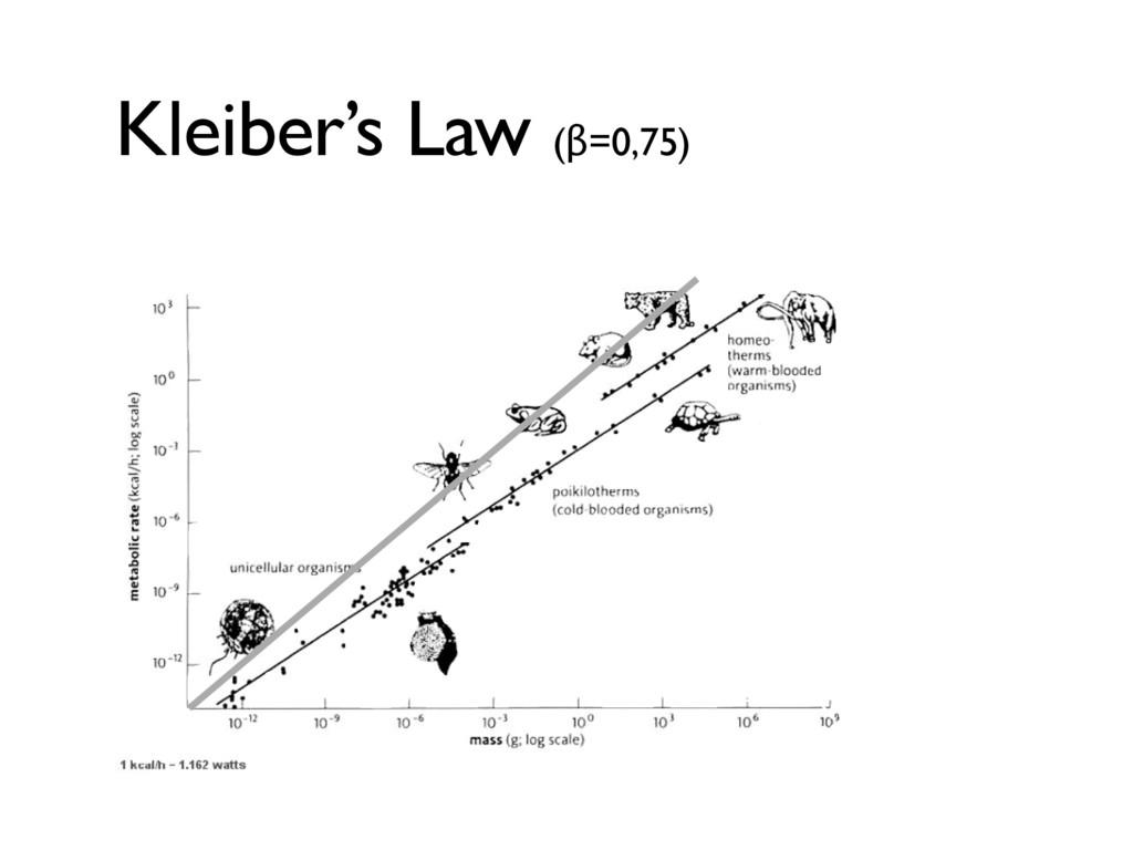 Kleiber's Law (β=0,75)