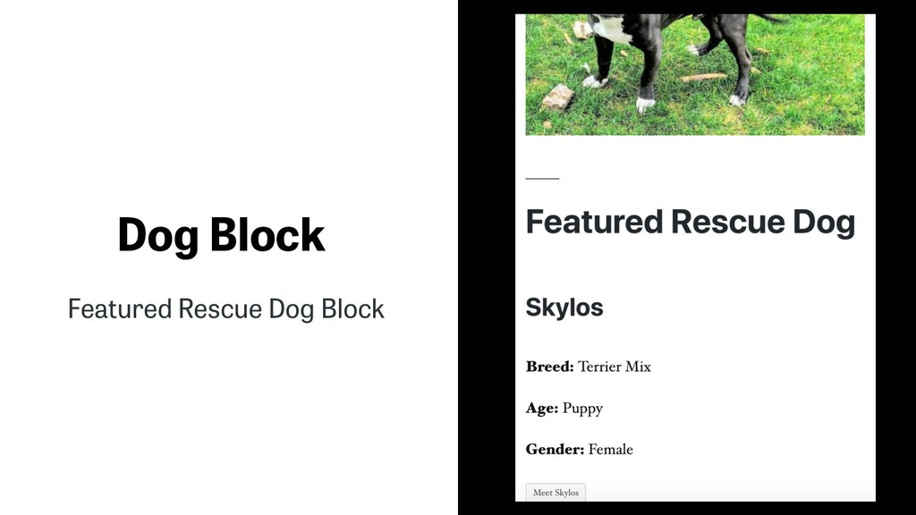 Dog Block Featured Rescue Dog Block