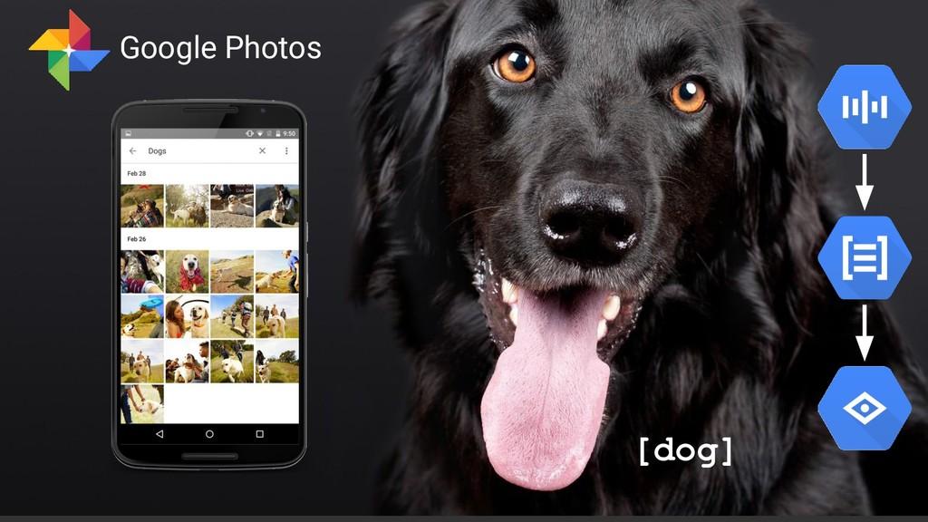 Confidential & Proprietary [dog] Google Photos