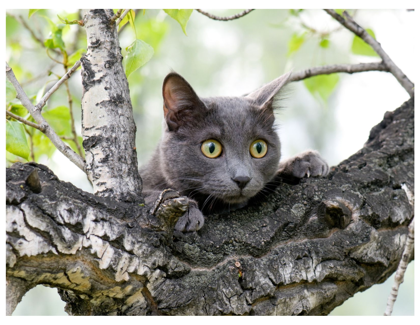 E-NEWSLETTERS If you don't have an email list, ...