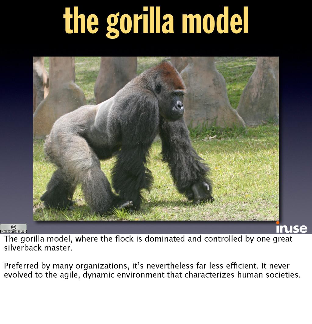 the gorilla model The gorilla model, where the ...