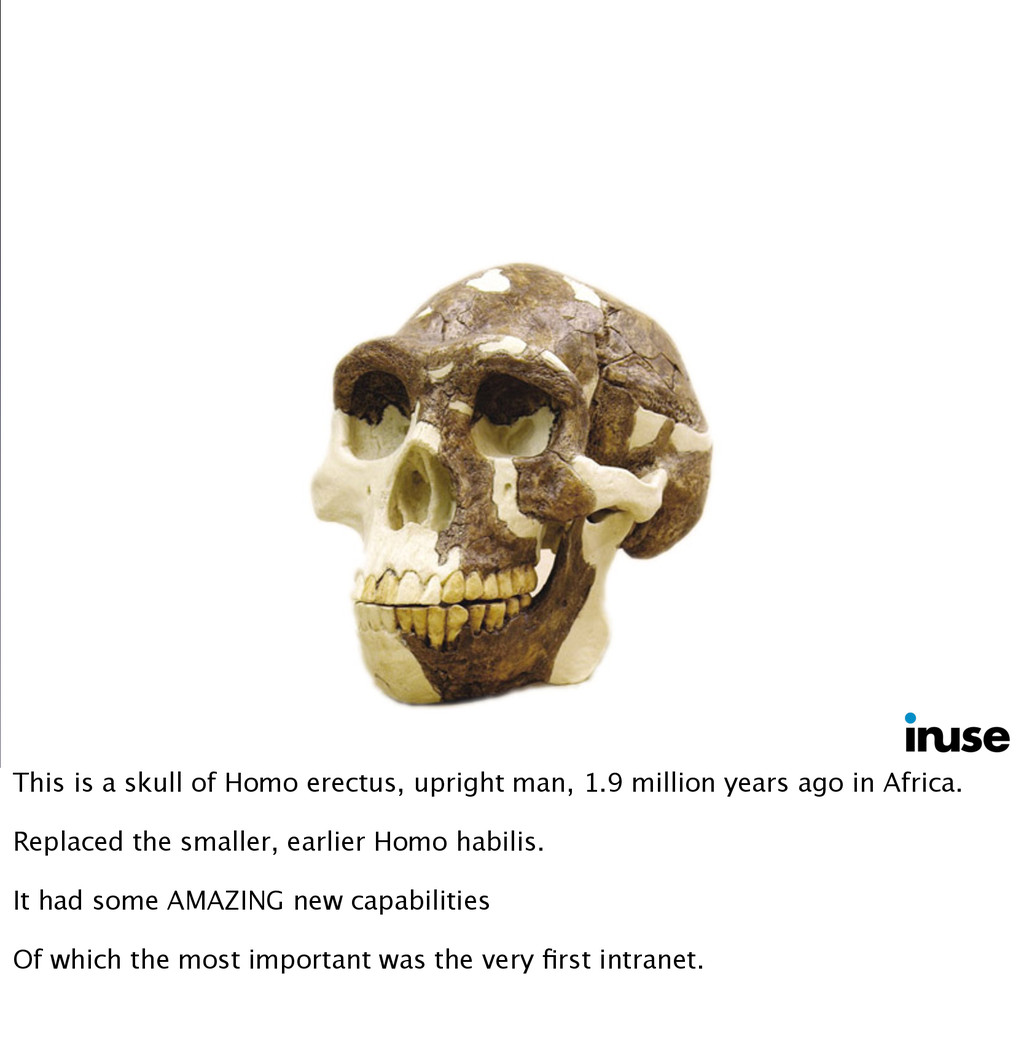 This is a skull of Homo erectus, upright man, 1...