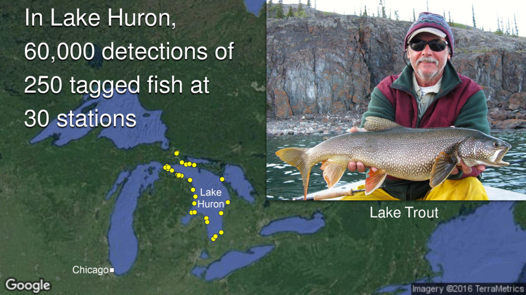 In Lake Huron, 60,000 detections of 250 tagged ...