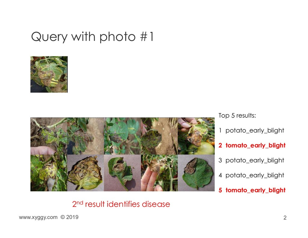 2 Query with photo #1 Top 5 results: 1 potato_e...