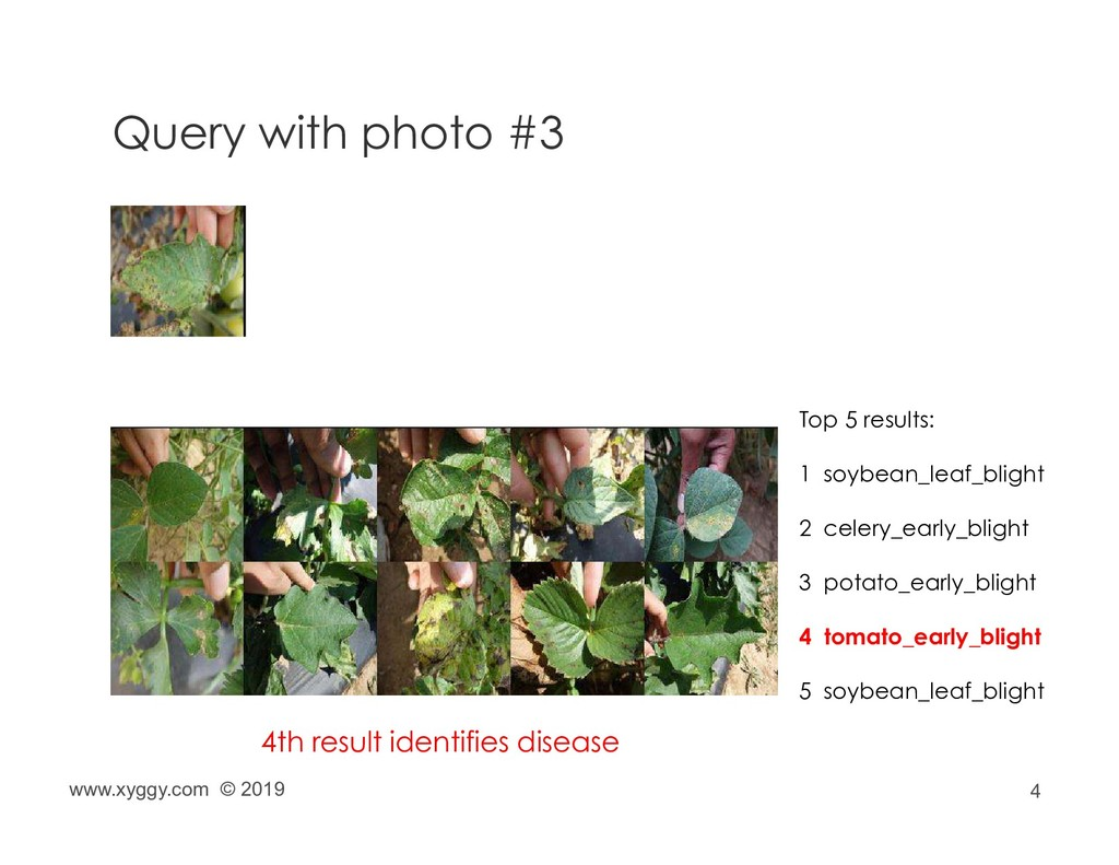 4 Query with photo #3 Top 5 results: 1 soybean_...