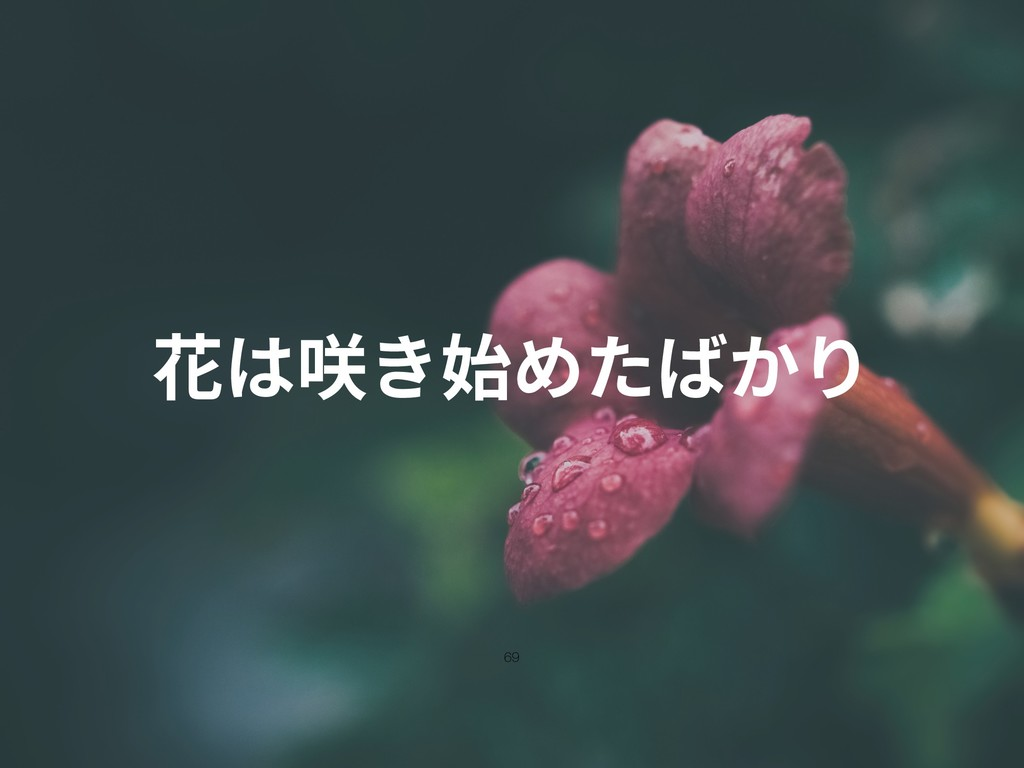 花は咲き始めたばかり 69