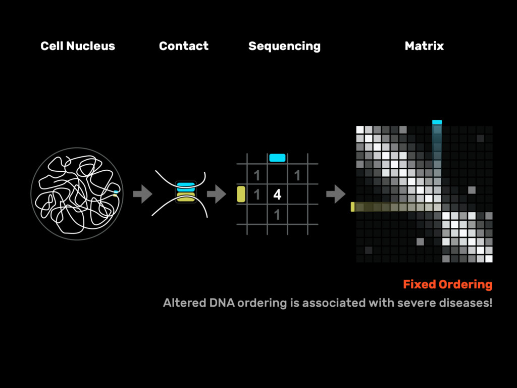 Cell Nucleus Contact Sequencing Matrix Fixed Or...