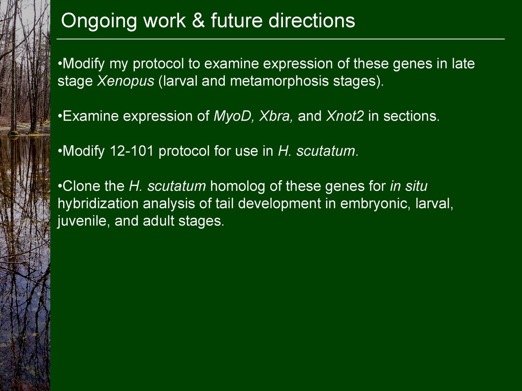 Ongoing work & future directions •Examine expr...