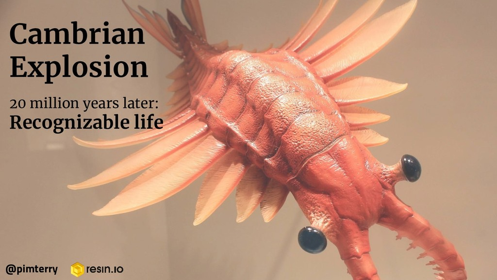 Cambrian Explosion 20 million years later: Reco...