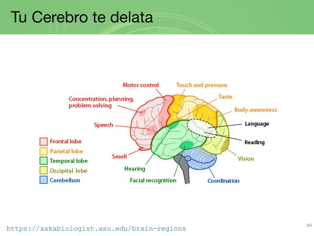 Tu Cerebro te delata 44 https://askabiologist.a...