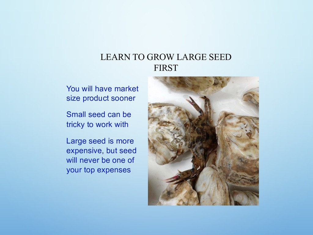 LEARN TO GROW LARGE SEED FIRST You will have ma...