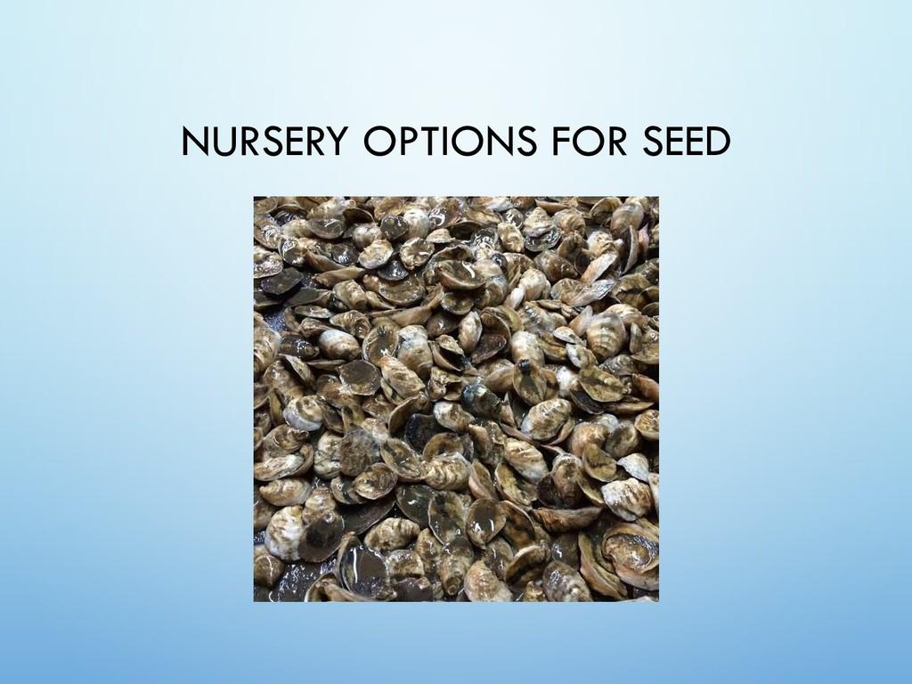NURSERY OPTIONS FOR SEED