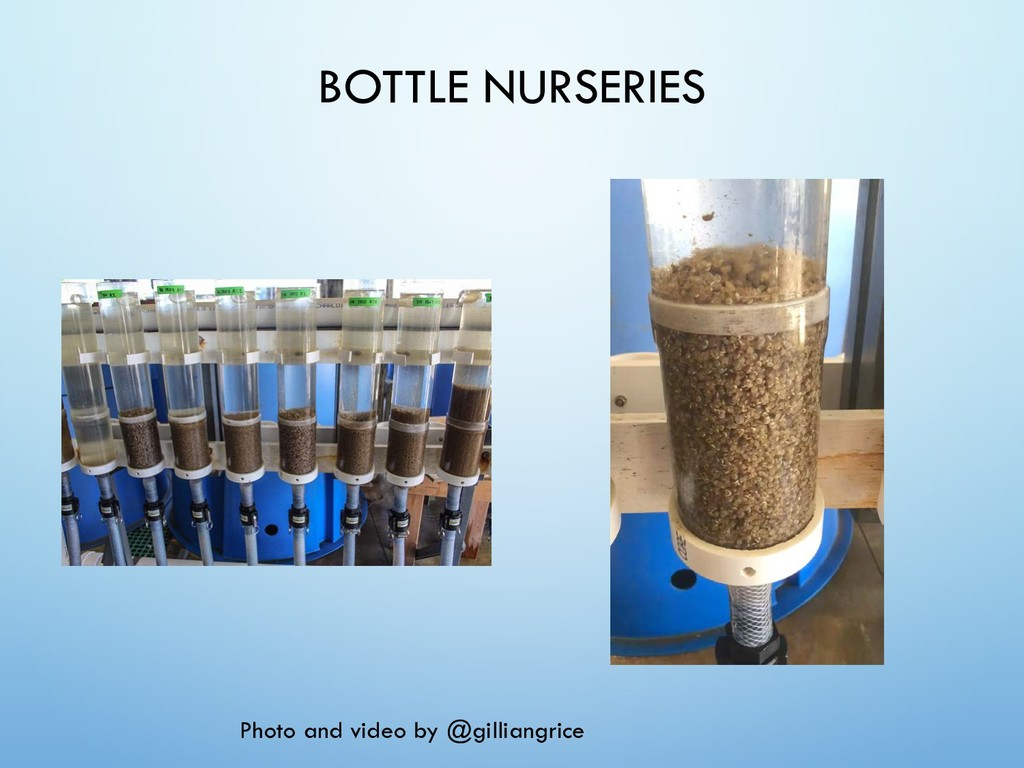BOTTLE NURSERIES Photo and video by @gilliangri...