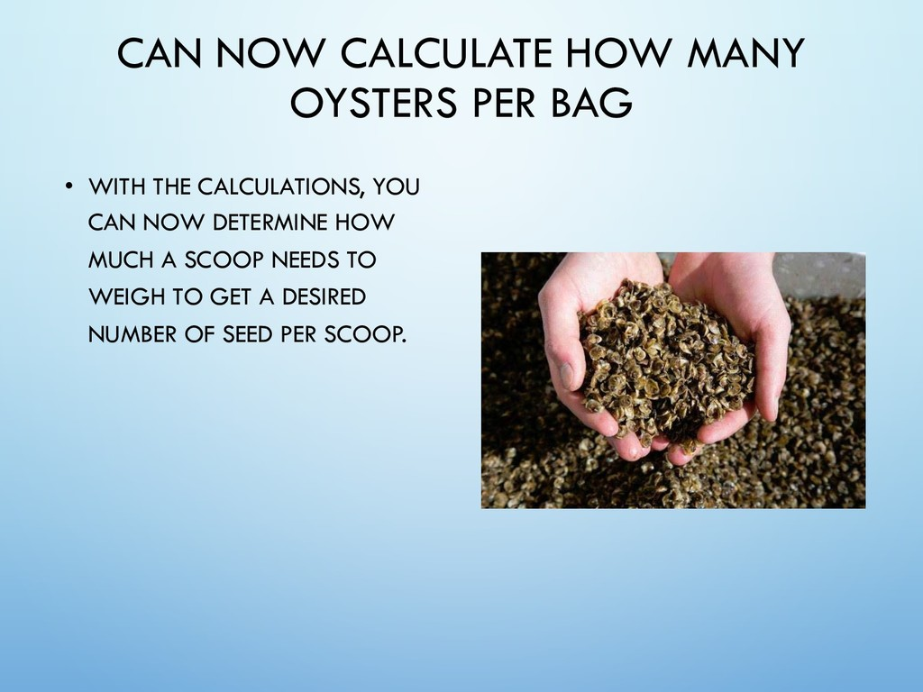 CAN NOW CALCULATE HOW MANY OYSTERS PER BAG • WI...