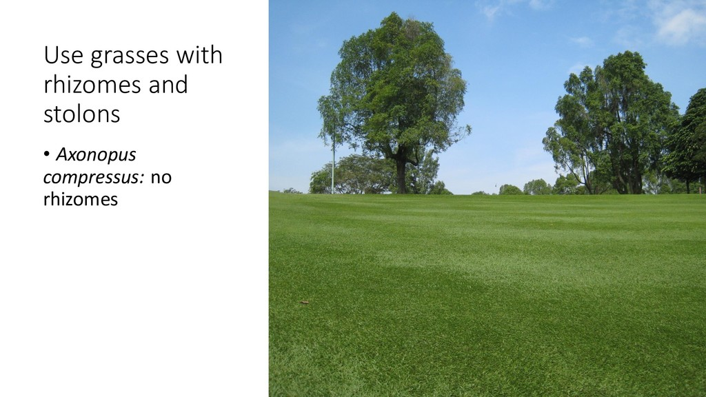Use grasses with rhizomes and stolons • Axonopu...