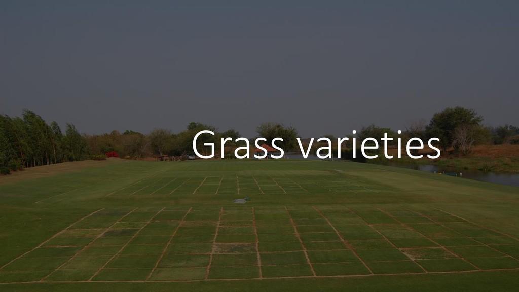 Grass varieties