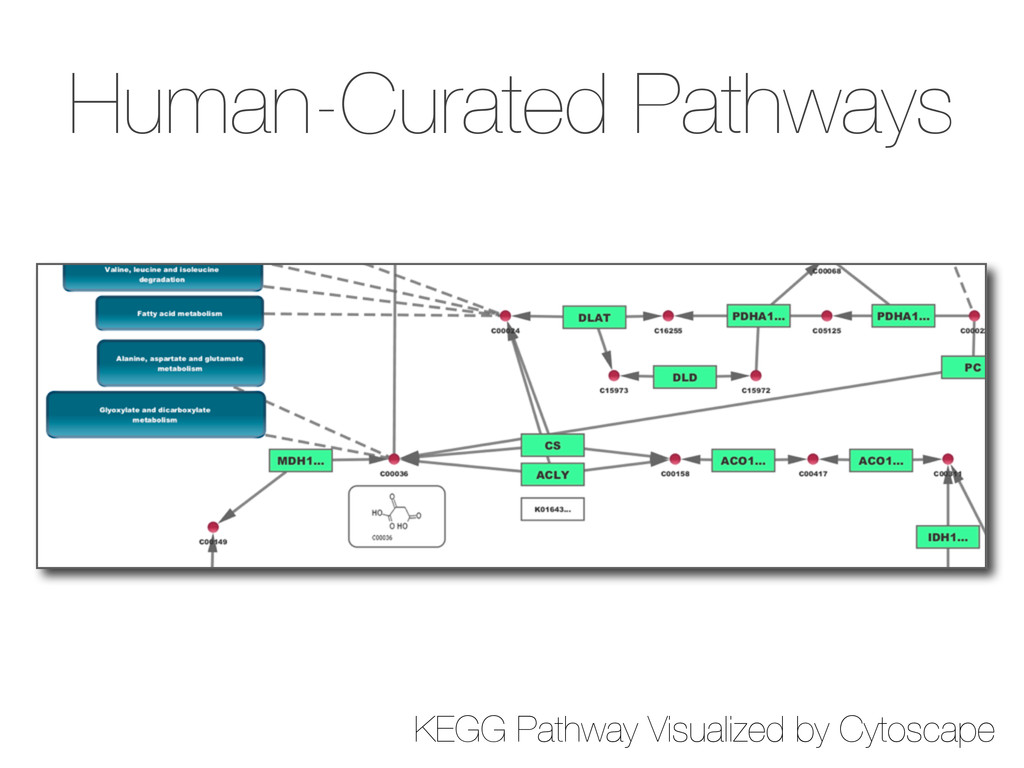 Human-Curated Pathways KEGG Pathway Visualized ...