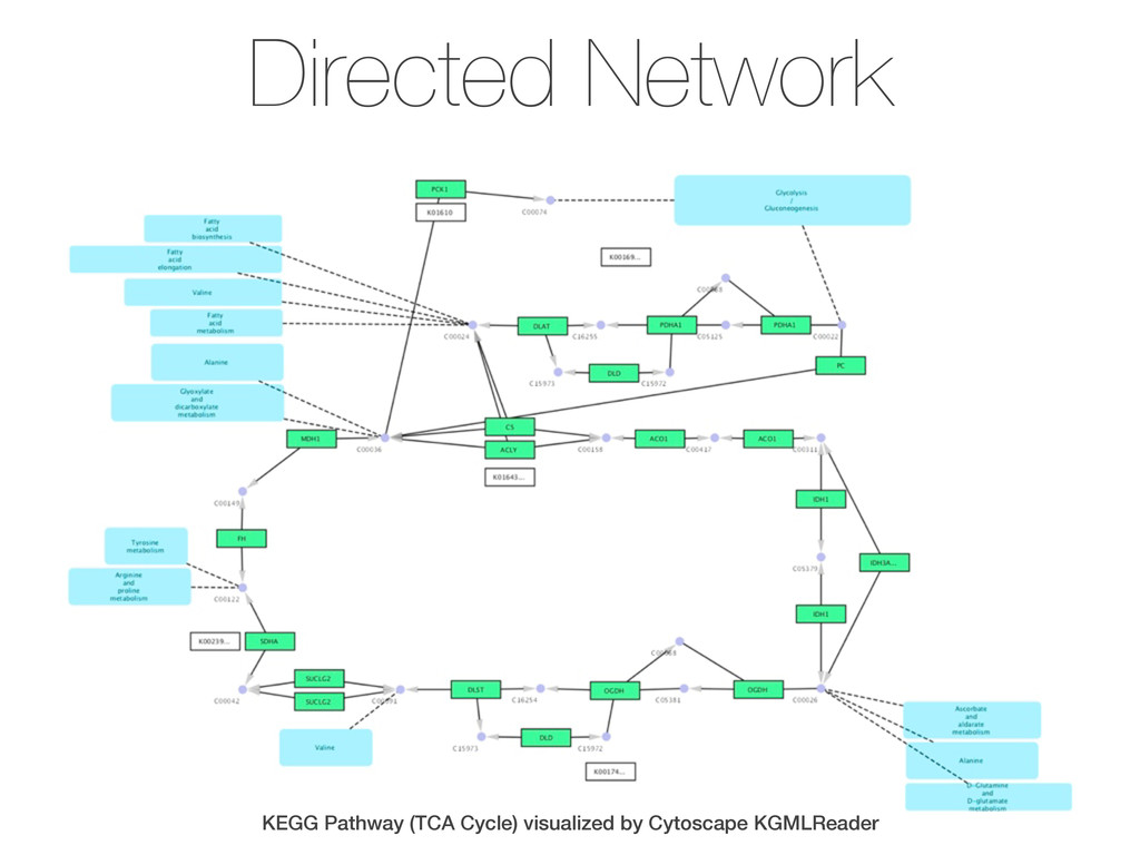Directed Network KEGG Pathway (TCA Cycle) visua...