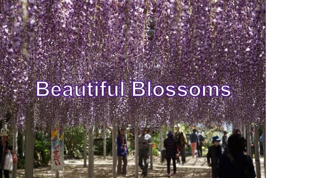 © 2020 Susumu Yamazaki Beautiful Blossoms