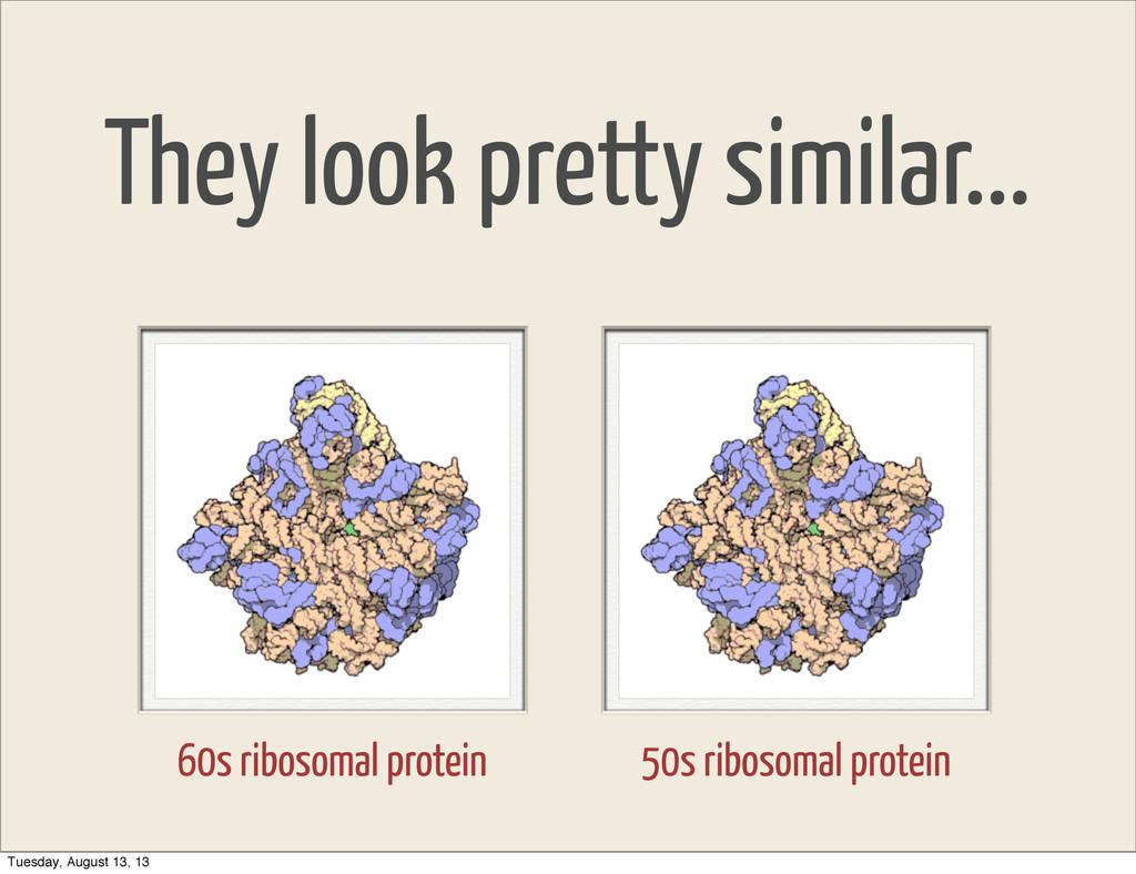They look pretty similar... 60s ribosomal prote...