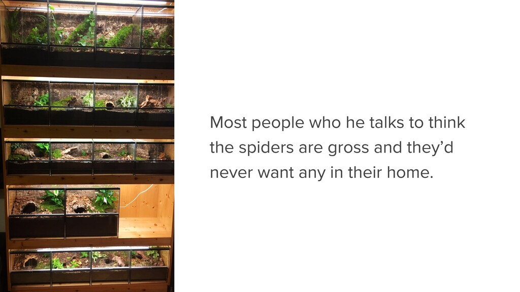 Most people who he talks to think the spiders a...