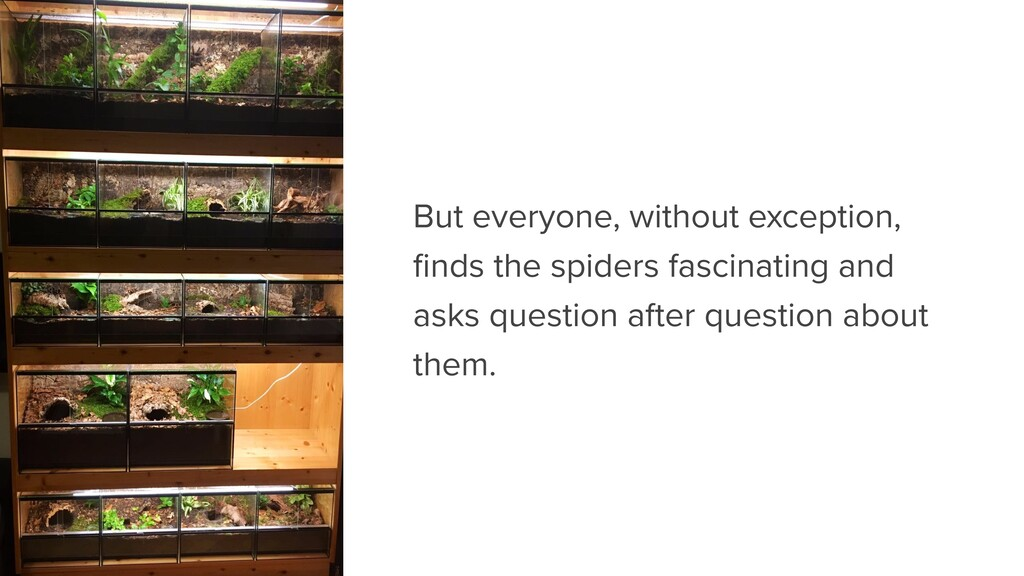 But everyone, without exception, finds the spide...