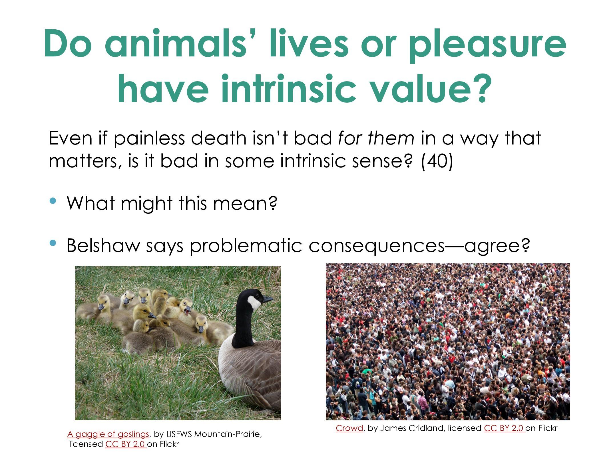 Do animals' lives or pleasure have intrinsic va...