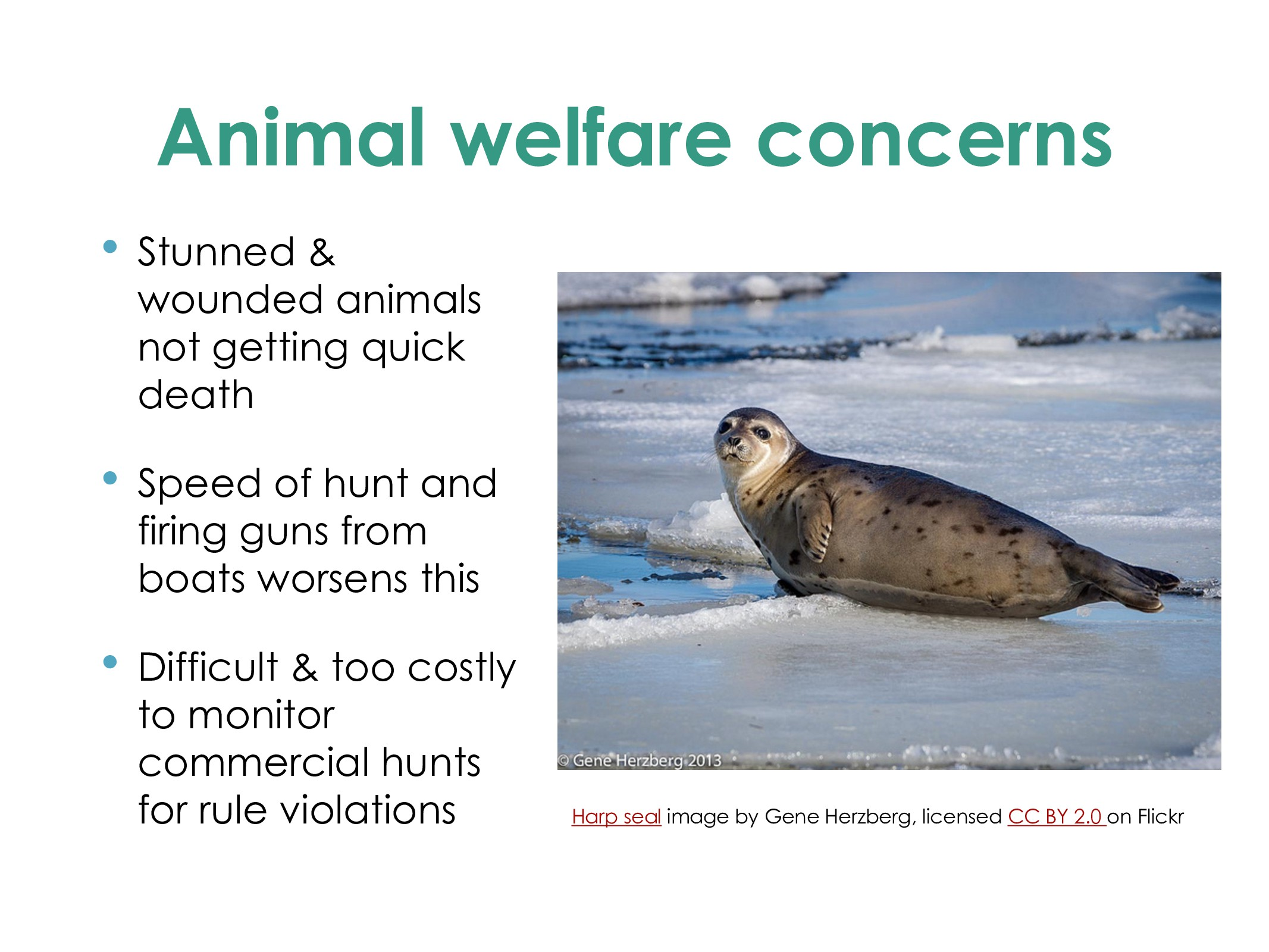 Animal welfare concerns • Stunned & wounded ani...
