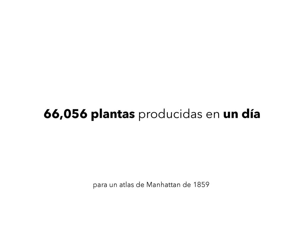 66,056 plantas producidas en un día para un atl...