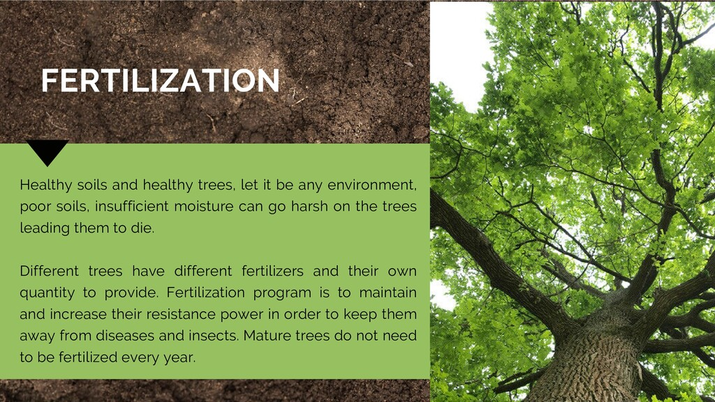 Healthy soils and healthy trees, let it be any ...