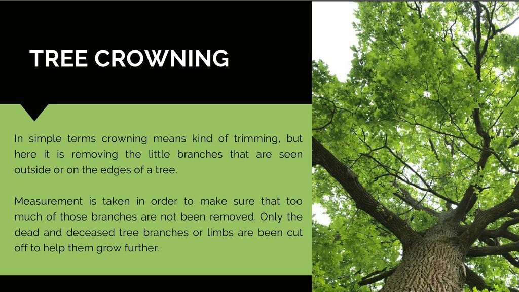 TREE CROWNING In simple terms crowning means ki...